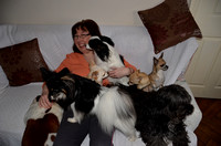 2012.01.12 Joannes and Christines dogs